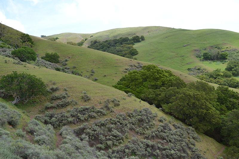 800px-Diablo_Range_near_Milpitas,_California_2