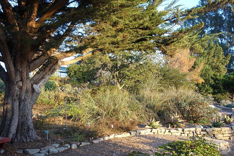San_Luis_Obispo_Botanical_Garden_-_San_Luis_Obispo,_CA_-_DSC06115