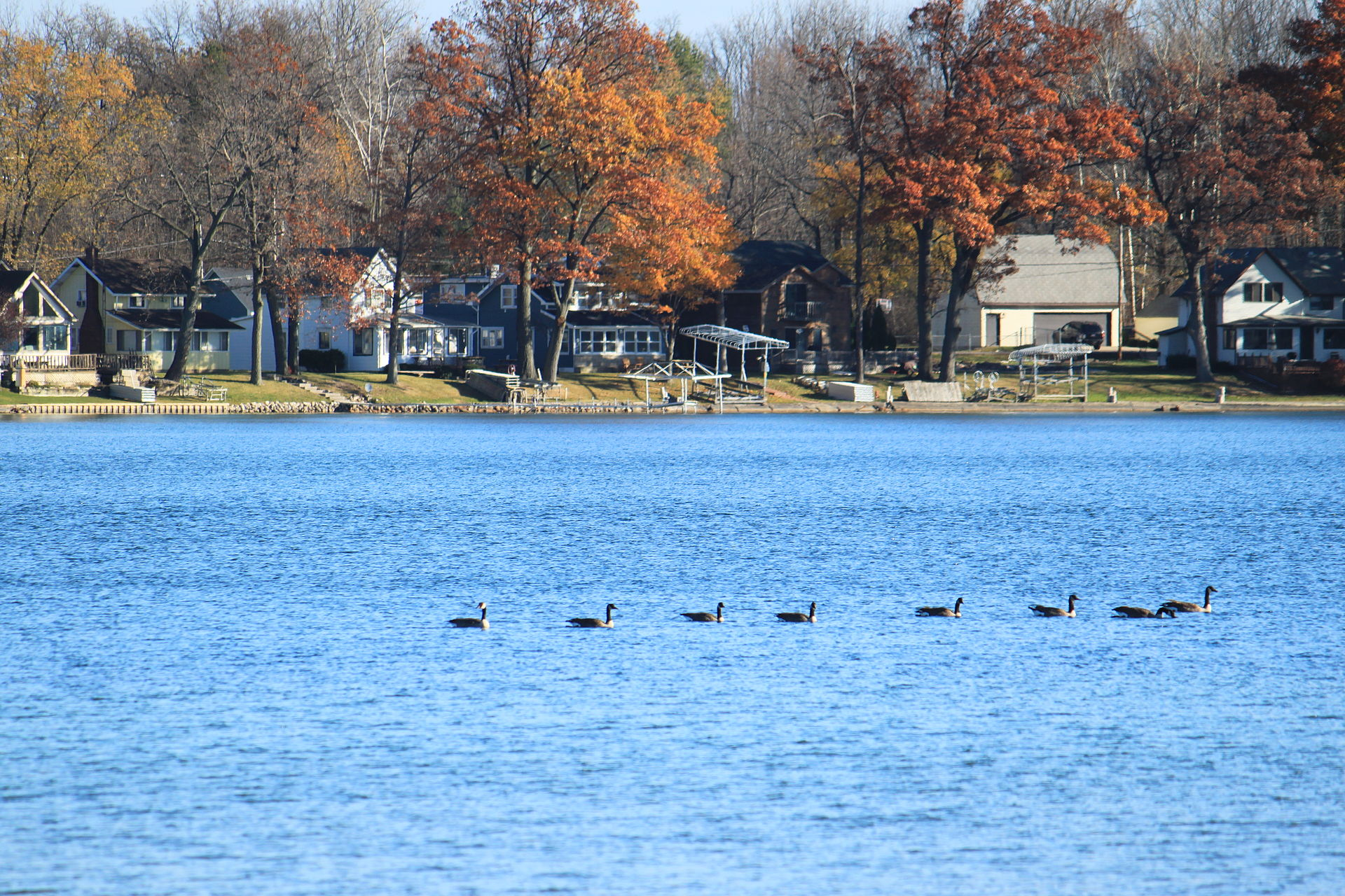 Clark_Lake_with_geese_Columbia_Township_Michigan